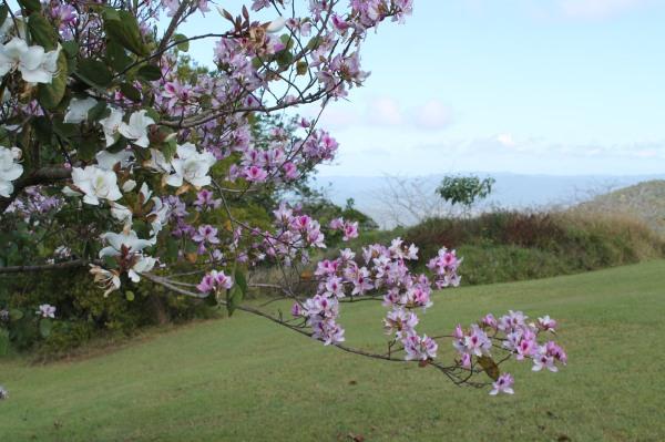 garden spring 043