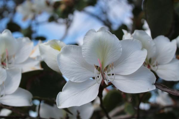 garden spring 045