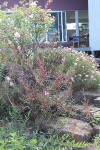 garden spring 052