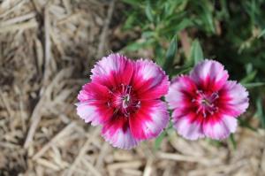 garden spring 057