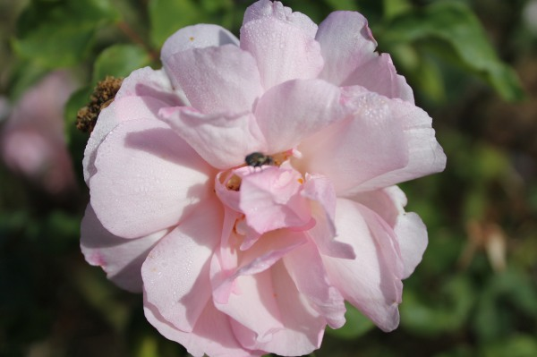 garden spring 063