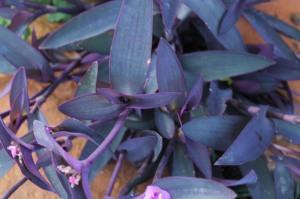 garden spring 065