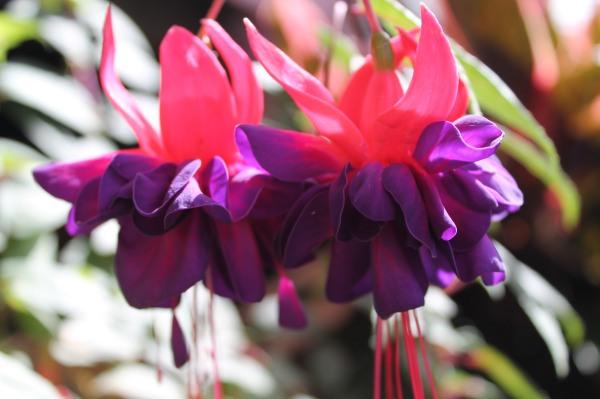 garden spring 068