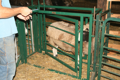 sheep catch gate